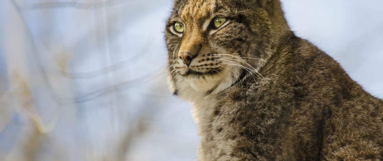 Wildabschüsse, Wildabschüsse 2017 + 2018 Jagdwirtschaft